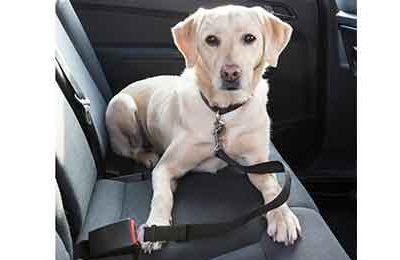 Cinturón de seguridad para mascotas